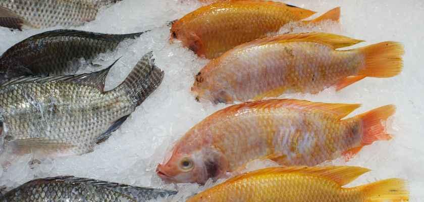 Cómo descongelar pescado correctamente