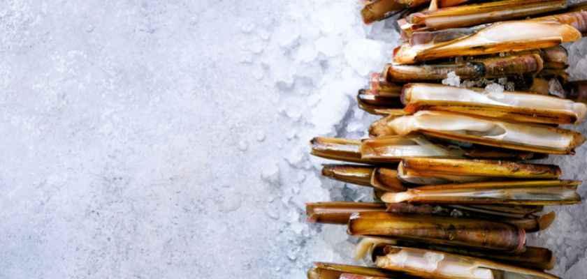 Como conservar navajas frescas en la nevera